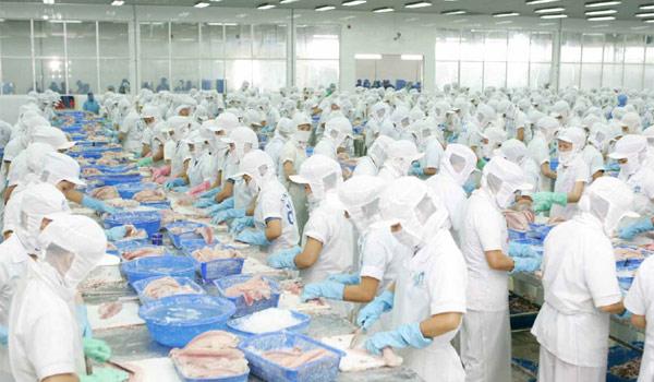 مصنع السمك